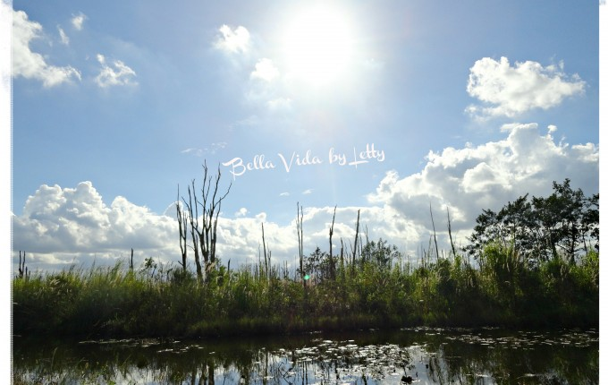 Florida Everglades swamps