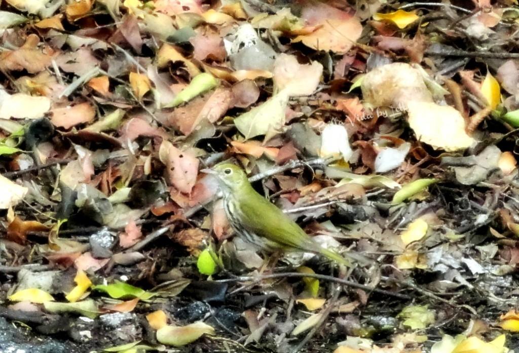 DJKL Mohawk Bird