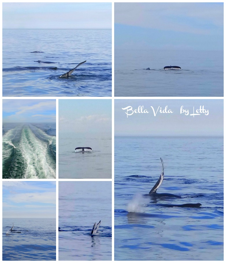 Whale Watching Collage
